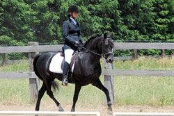 Equinox Beau Dandy and Wendy - Level 2 Dressage