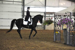 Samor's B-Forevermore ('Murphy')-Dressage demo at Morgan Classic