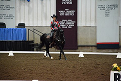 Beau Dandy - Western Dressage -Morgan Grand Nationals/World Championship - 3rd place!