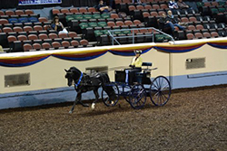 Beau Dandy @ Morgan Grand Nationals in Oklahoma